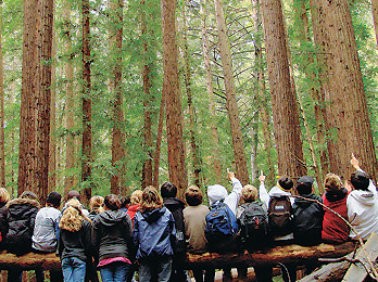Nature Studies, forest classroom